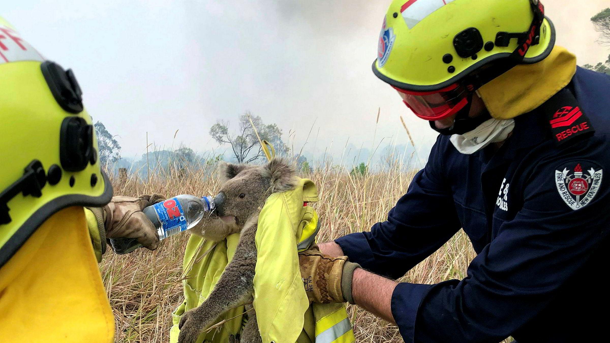En koalabjørn som er reddet fra skogbranner i New South Wales i Australia, får vann av redningsteamet. Høyere temperaturer som følge av klimaendringer, øker faren for slike branner i landet.