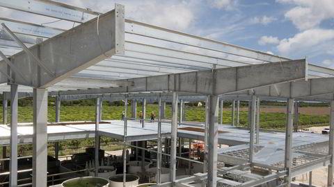 Atlantic Sapphire bygger verdens største landbaserte oppdrettsanlegg for laks på sydspissen av Florida. Her fra september 2018.