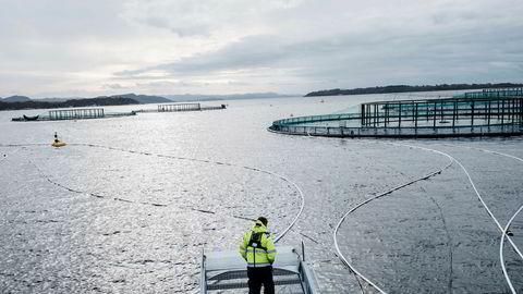 Mowi stuper på børs etter skuffende resultat. Bildet er tatt på selskapets anlegg på Finnøy utenfor Stavanger, da det fortsatt het Marine Harvest.
