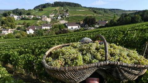 En stor avling er veldig godt nytt for alle burgundtilhengere. De siste årene har vært magre når det kommer til antall flasker.