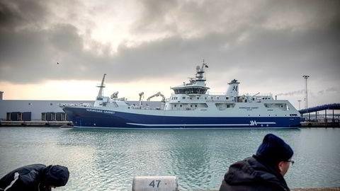 Skipet «Norwegian Gannet» er bygget for å frakte norsk laks levende til Danmark for slakting og foredling.