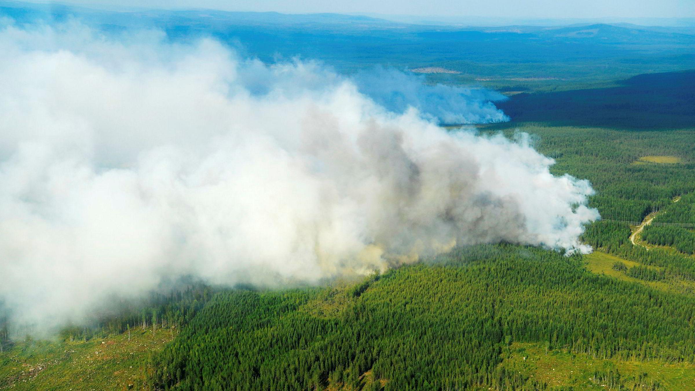 Mange skogranner i Sverige. På bildet brannen utenfor Ljusdal som er i ferd med å spre seg.