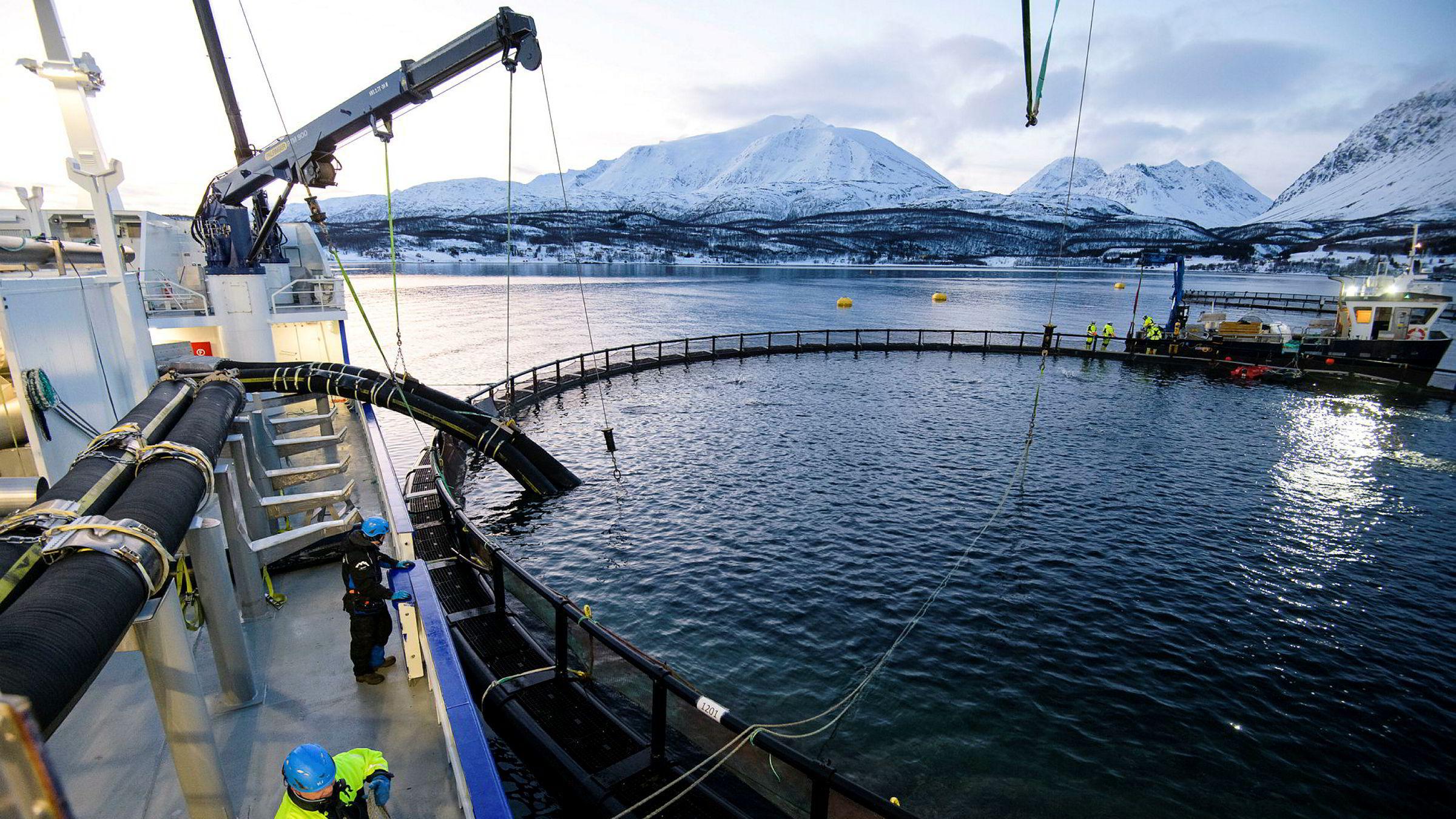 Nord-Norge er et av områdene der det er få konkurser. Her Brønnbåten RO Fortune på oppdrag hos oppdrettsanlegget Lerøy Årøya i Lyngenfjorden.