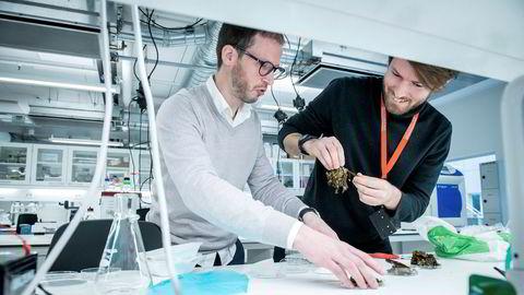 Gründer Guy Maurice i oppstartsselskapet B'zeos (til venstre) ser på tare-prøver på laboratoriet hos Sharelab sammen med Jon Funderud i Seaweed Energy Solutions.