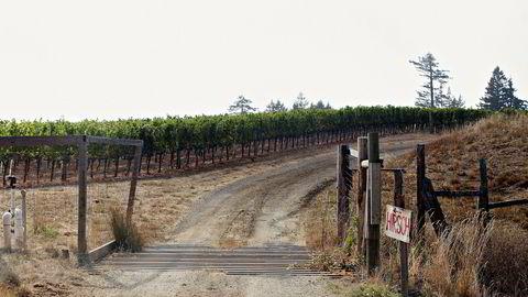 Vingården Hirsch på Sonoma Coast lager noen av de beste vinene på druen Pinot Noir i California. I tillegg selger de blant annet druer til Ted Lemon og Littorai.