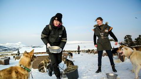 Tromsø villmarkssenter har fått de første avbestillingene fra kinesiske turister. Her mater kommunikasjonssjef Lili Geiger og guide Angi Binda hundene før huskyene onsdag kveld tar 100 turister fra Hurtigruten med på hundesledetur.