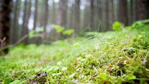 Tilplanting med gran vil kunne gi en betydelig klimaeffekt, viser ny forskning.