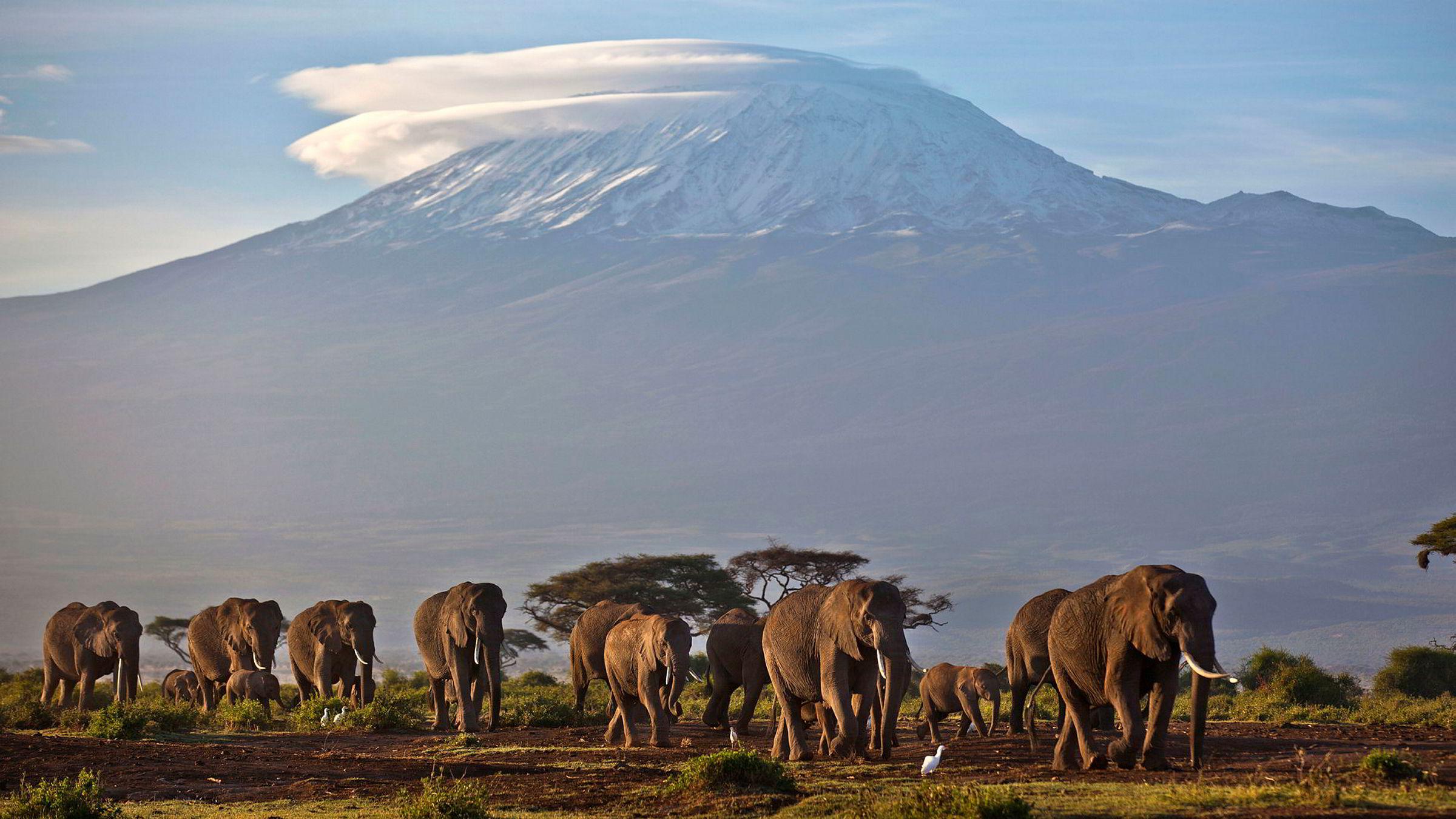 Dagens Næringsliv har tidligere fortalt om hvordan obligasjonsmegleren Atle Sigmundstad døde av akutt høydesyke på fjelltur til Kilimanjaro i Tanzania.