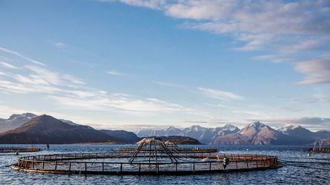 Lerøy Seafood leverer svakere resultater i fjerde kvartal. Her fra Lerøy Auroras anlegg i Kågen i Nord-Troms.