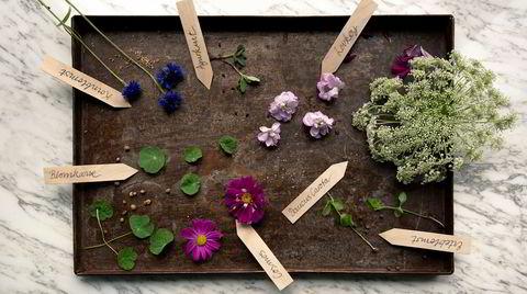 Gjør det selv. Kornblomst, erteblomst, blomkarse, agurkurt og erteblomst kan alle få til i en krukke på forsommeren. Kongeskjerm og levkøy krever litt mer planlegging.