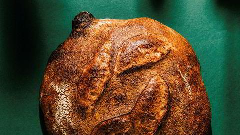 Sur kultur. En god surdeigsstarter er grunnmuren som trengs for å lage perfekte surdeigsbrød.