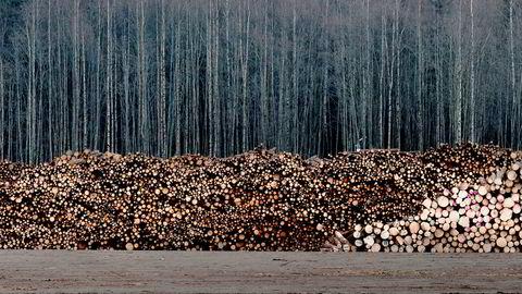 Norges skoger drives slik at vi oppnår størst mulig biomasseproduksjon og mer «ren energi for alle». Det ville imidlertid gå sterkt ut over biomangfoldet i skogene våre, skriver NMBU-rektor Sjur Baardsen.