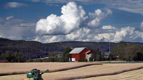 Det ligger an til å bli dårlige avlinger i år på grunn av det tørre været.