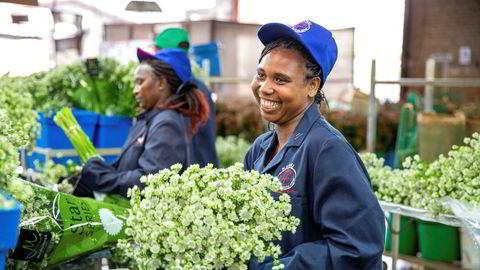 Blomsterprodusenten Marginpar i Kenya og Etiopia eksporterer til Europa og mistet så godt som alle inntekter da blomsterbørsen i Amsterdam lukket dørene, skriver Tellef Thorleifsson i Norfund.