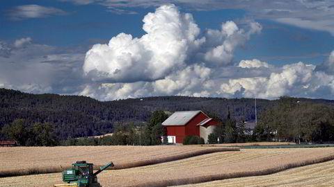 Trengs det statlig kornlagring av hensyn til matsikkerhet? Sp og Ap mener ja. Utredninger sier nei.