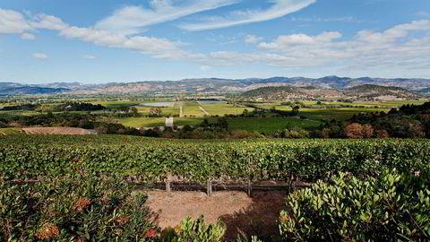 Napa Valley er fortsatt det viktigste vinområdet i USA, selv om naboen Sonoma og Santa Barbara lenger sør puster det i nakken.