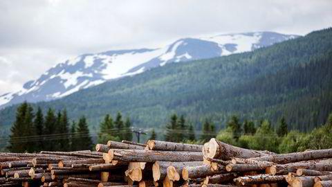 Hva kan skogbruksnæringen selv bidra med da? Først og fremst sitter vi på en fantastisk og for lite utnyttet råvarebase. Kombinert med gode logistikkløsninger og forutsigbare leveranser er dette et avgjørende bidrag til ny industrietablering, skriver artikkelforfatteren.