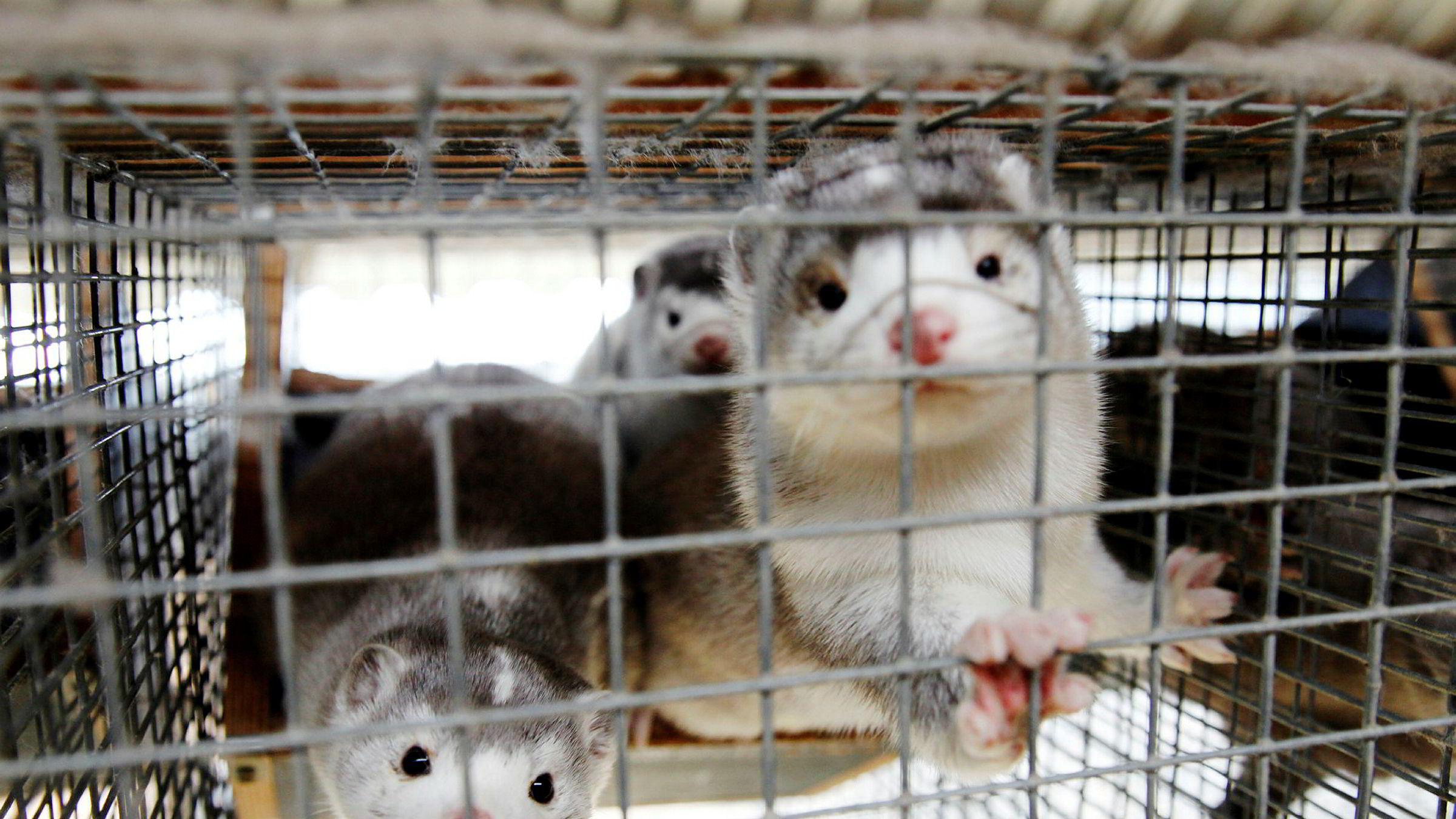 Regjeringen høstet mye kritikk for sitt første forslag til erstatning for bøndene som blir rammet av pelsdyrforbudet. Onsdag la Landbruksdepartementet frem den endelige forskriften.