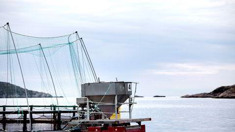 Skattemodeller må baserer seg på faktisk investeringsadferd i havbruksnæringen, mener artikkelforfatterne.