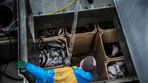 Det uregistrerte fisket i Norge var på 29 prosent mer enn kvotene og hadde en førstehåndsverdi på cirka 2,7 milliarder kroner i fjor.