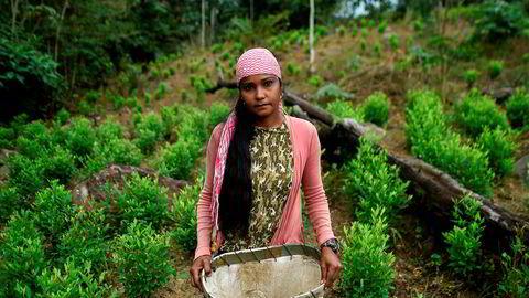 Naikelly Delgado (37) er blant de mange flyktningene fra Venezuela som jobber med å plukke kokablader i Colombia, rett over grensen i Catatumbo-regionen. Bildet er fra 2019.