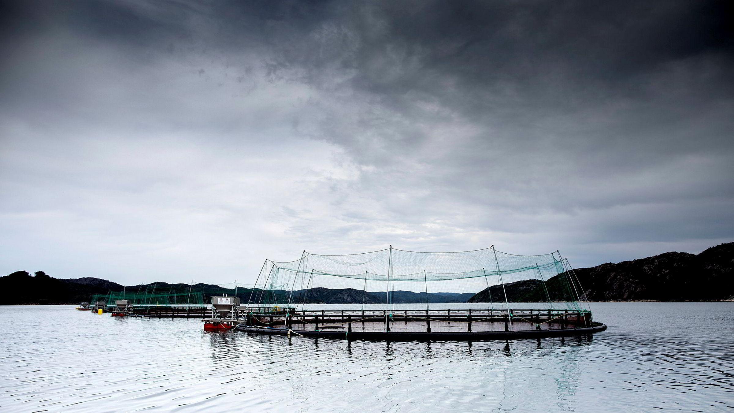 Med vårt forslag vil havbrukskommunene få stabile skatteinntekter fra den lokale havbruksaktiviteten, skriver utvalgsleder Karen Helene Ulltveit-Moe om havbrukskatteutvalgets forslag til skatt på oppdrettsnæringens overskudd fra bruken av naturressursene. Her fra Korshavn Havbruk som driver med lakseoppdrett.