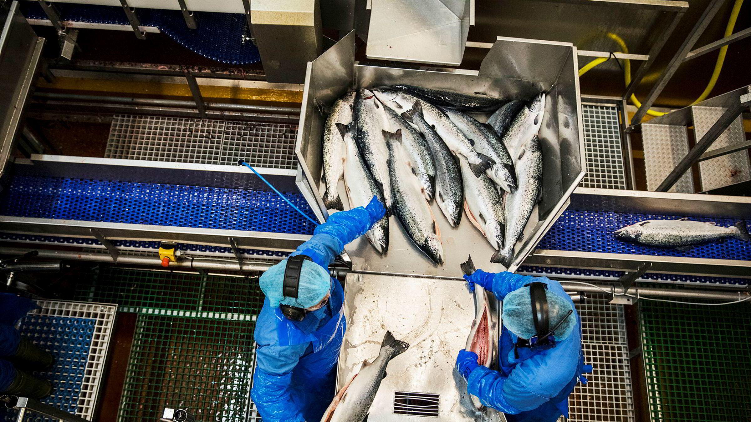 Gransker fiskeindustrien for menneskehandel. Illustrasjonsfoto har ikke tilknytning til innholdet i saken.