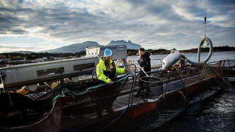 Letsea ble årets gaselle i Nordland i både 2016 og 2017. Her er avdelingsleder Henriette Hanssen og daglig leder Kristian Johnsen på forskningsstasjonen i Solfjellsjø da DN besøkte anlegget høsten 2016.