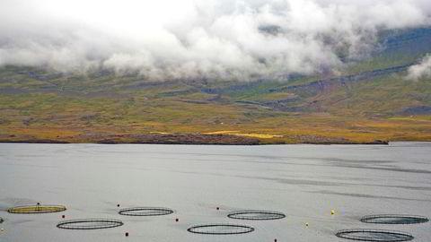Fiskeoppdrett er foreløpig en marginal industri på Island. Her et anlegg utenfor Djupivogur på østkysten av øya.