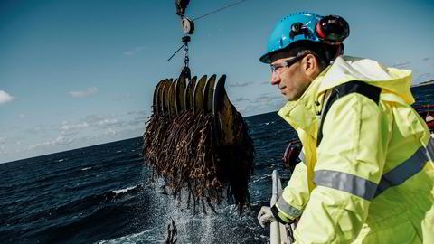 Her tråler fartøyet «Sjøalg» tare langs Jærkysten. Råvaresjef Harald Bredahl i FMC Biopolymer følger med på fangsten.