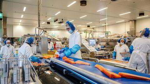 Norske laksegiganter risikerer milliardbøter hvis de blir felt for kartellvirksomhet.