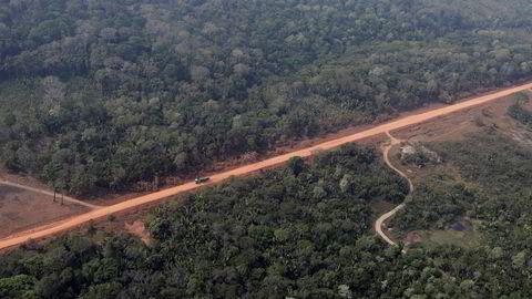 Det står dårligere til med gjenværende regnskog i verden enn tidligere antatt.