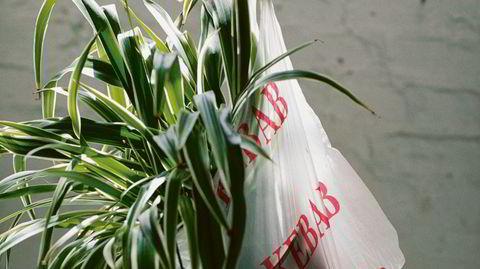Helt normale planter. Ingrid Goverud Ulstein har skrevet en håndbok med de «mest grunnleggende stelletipsene» for potteplantene som oftest dukker opp i Norske hjem.