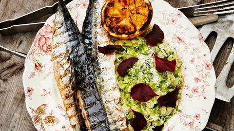 Sommerfisk. Makrellen er på sitt beste tidlig på sommeren. Hanne Rutgerson griller den og gir den italiensk tilbehør.