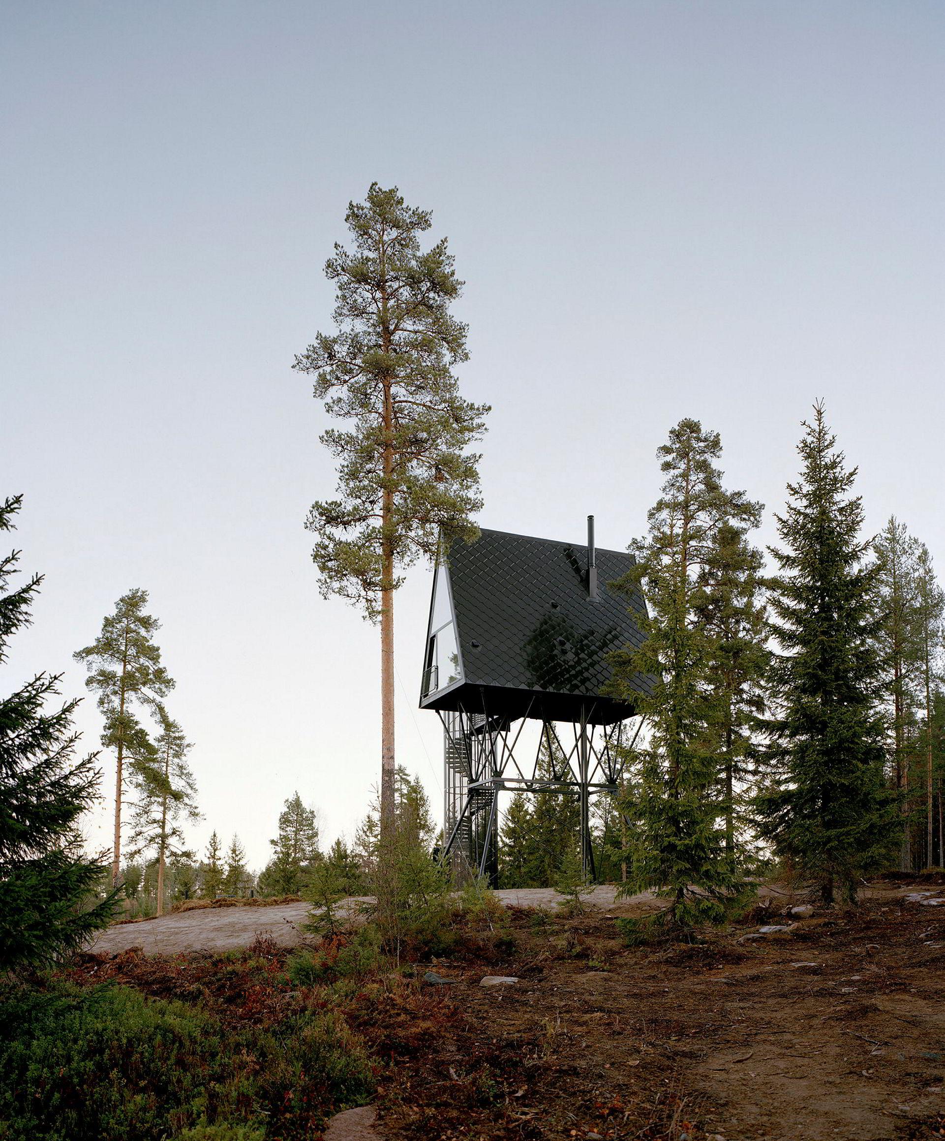 Tretopphytter finnskogen