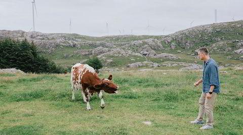 En sint ku rauter mot Kjetil Lund, den nye sjefen for Norges vassdrags- og energidirektorat (NVE). Han er innom hjemkommunen Hå, der vindturbiner spidder synsranden på alle kanter.
