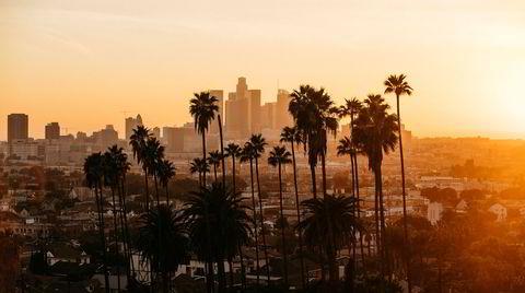 Rammer inn. Palmene i Los Angeles er uunngåelig del av bybildet, men disse underlige plantene, som biologisk ligner mer på gress enn trær, er i trøbbel