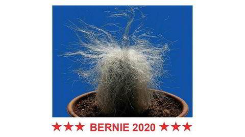 Utsolgt flere ganger. Bernie Sanders-kaktusen er avbildet på en hvit genser over slagordet «BERNIE 2020».