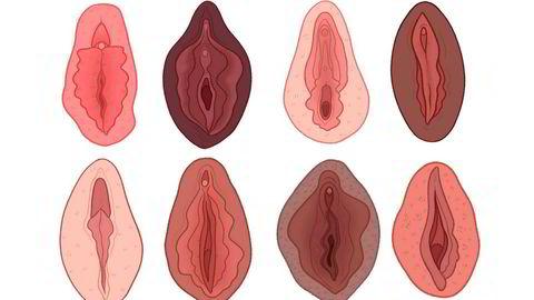 Mythbushters. Humor må til for å knuse vaginamyter, ifølge illustratøren Charlotte Willcox.