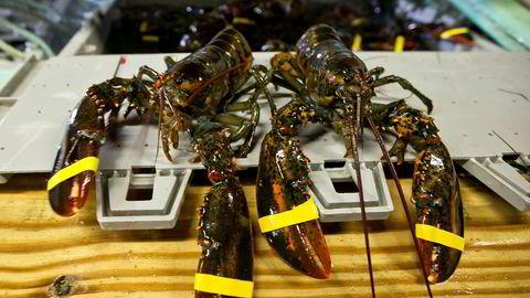 Fredag opplyste den kinesiske regjeringen at amerikanske hummere vil bli pålagt en toll på 25 prosent, som et svar på at USA tidligere på dagen varslet toll på kinesiske varer til en verdi av 50 milliarder dollar.