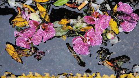 Vakker rennestein. Johanna Neurath, som til daglig er designsjef i kunstbokforlaget Thames & Hudson, har fotografert blomstermarkedet i Columbia Road i flere år, men zoomet nedover. Resultatet er blitt fotoboken «Columbia Road».