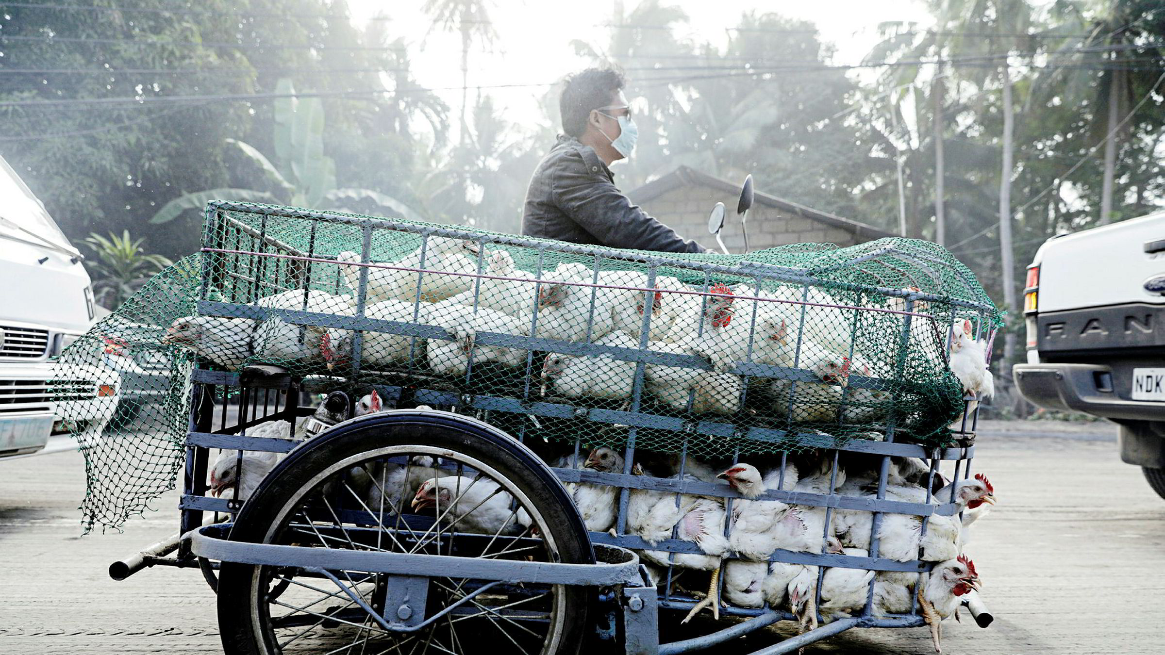Bildetekst til selve bildet. Dozens of chickens are hauled in a rickshaw as residents affected by the erupting Taal Volcano are temporarily allowed to collect belongings and abandoned animals from their homes in Agoncillo, Batangas.