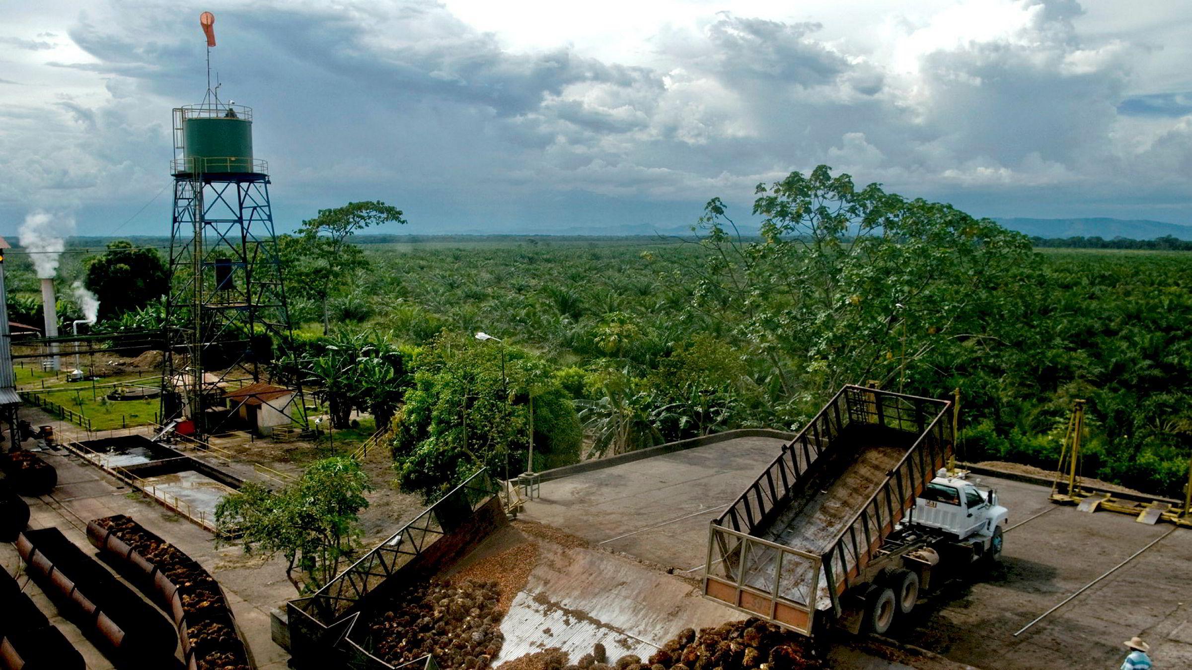 Colombia er verdens 4 største produsent av palme olje.
