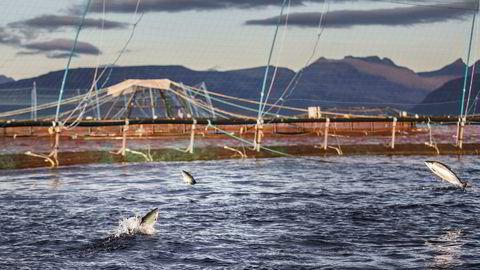 Det er ventet nyheter i laksenæringen denne uken. Fiskeriminister Harald Tom Nesvik skal bestemme produksjonsvolumet av laks for ulike områder langs norskekysten.