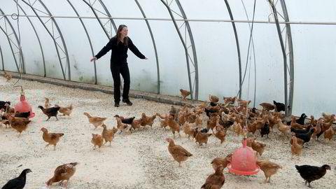 Els Geelen gjeter første kull av kyllinger med økologiske foreldre ved Homlagarden.