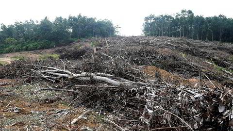 Bildet fra mai viser en skog som er fjernet for å gi plass til en plantasje for palmeolje på Sumatra.
