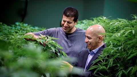 Grønne fingre. Jessie Flores (til høyre) er ansvarlig for økonomisk utvikling i ørkenbyen Adelanto, som er i ferd med å endre seg drastisk. 44 lisenser til å dyrke marihuana i storskala er på plass. Flere kommer. En av dem som er i gang, er Adam Shahin.