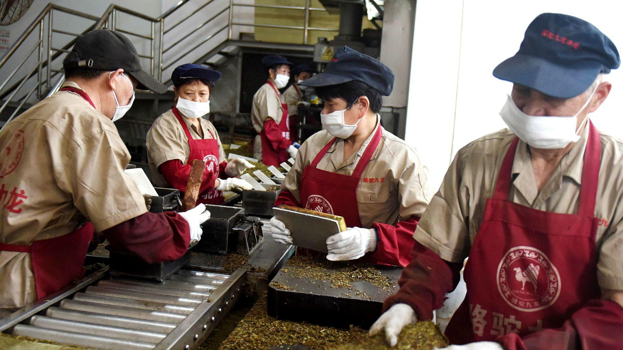 Belt and Road-prosjektet skal knytte Kina og Europa bedre sammen og er ny plattform for praktisk samarbeid mellom Kina og Norge, skriver Kinas ambassadør i dette innlegget. Her jobber kinesiske arbeidere med å pakke teblader for eksport.