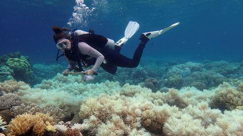 Sol og varmt vann gjør at korallrevene blekner og dør. Livet i havet er avhengig av korallrevene. Forsvinner de forsvinner store mengder fisk og andre arter. Udatert bilde fra Great Barrier Reef publisert avARC Centre of Excellence for Coral Reef Studies 10. april i år.