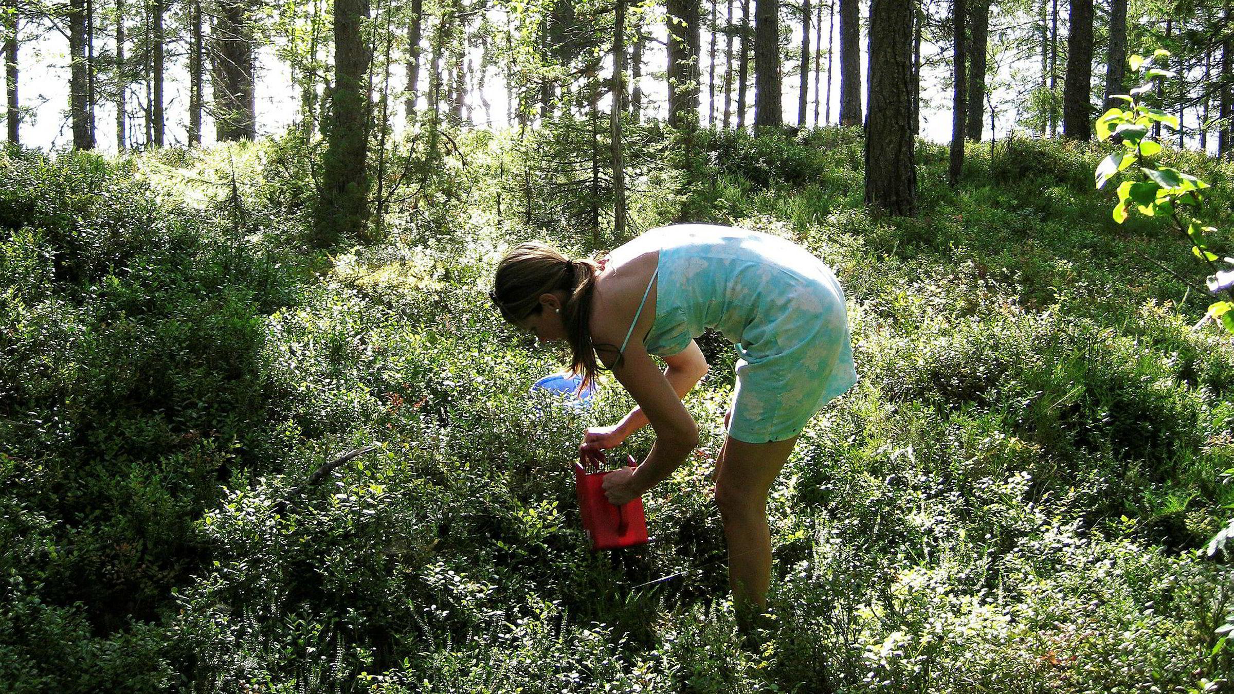 Der er likevel en vesensforskjell: Hun som høster fra naturen, kan vite at hun bidrar til at det blir mer intakt natur enn ellers, og at miljøet derved blir bedre. Det kan ikke de andre, sier forfatteren.